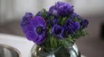La fleur choisie par Bertrand Labilloy était la violette...
